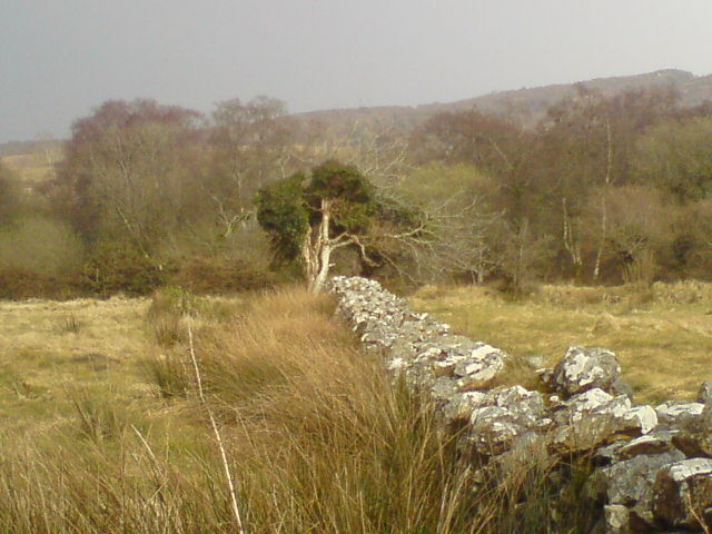 A wall with a tree at the far end, in wild countryside